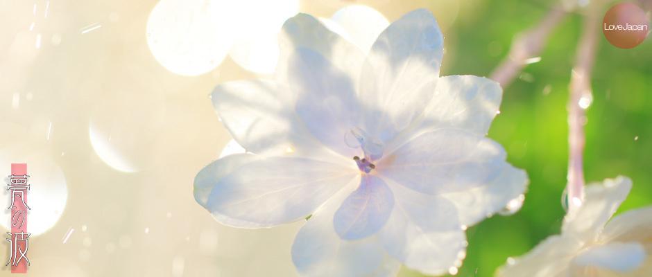 庭の紫陽花達 ~EOS7D2 + EF100mmF2.8LmacroIS USM~_b0157849_19265574.jpg