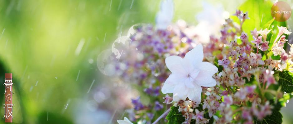 庭の紫陽花達 ~EOS7D2 + EF100mmF2.8LmacroIS USM~_b0157849_19580774.jpg