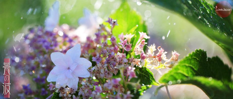 庭の紫陽花達 ~EOS7D2 + EF100mmF2.8LmacroIS USM~_b0157849_19583367.jpg