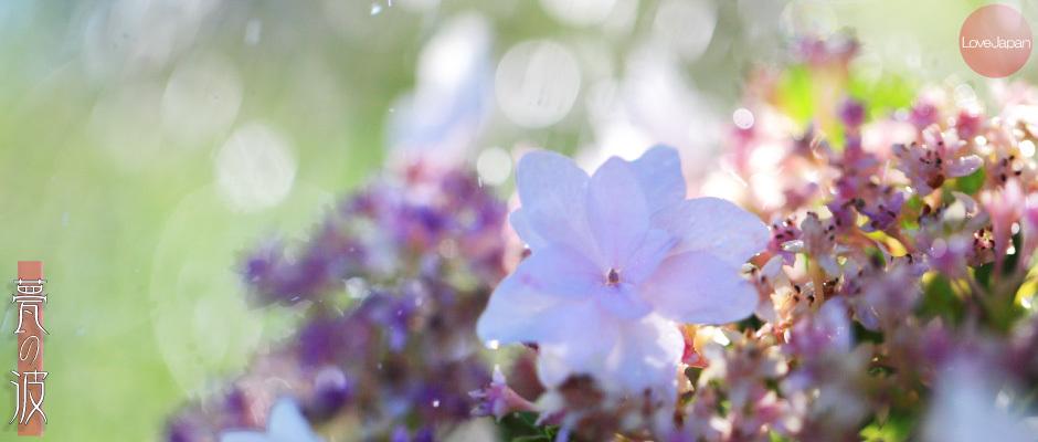 庭の紫陽花達 ~EOS7D2 + EF100mmF2.8LmacroIS USM~_b0157849_19590118.jpg