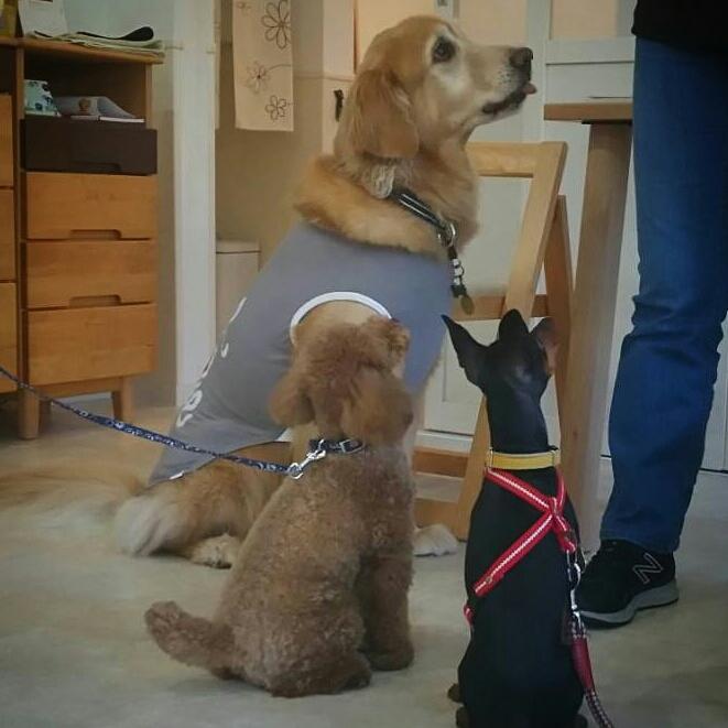 7月20日水曜日…犬の鍼治療往診日_d0256356_07190474.jpg