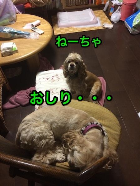 b0067012_138532.jpg