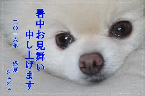 b0167519_17121100.jpg