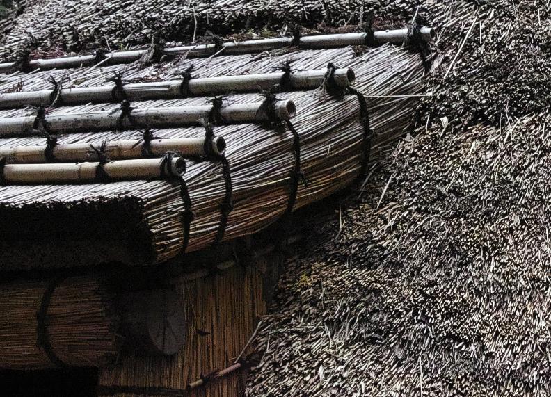 sd Quattro で野鳥撮影は楽しめないのか?いえいえ。~松戸市・21世紀の森公園でカワセミを楽しむ(前編)~_c0223825_00195146.jpg