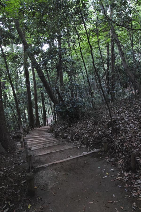 sd Quattro で野鳥撮影は楽しめないのか?いえいえ。~松戸市・21世紀の森公園でカワセミを楽しむ(前編)~_c0223825_00284697.jpg