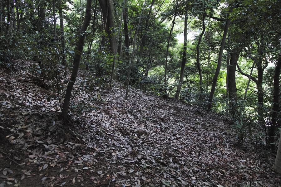 sd Quattro で野鳥撮影は楽しめないのか?いえいえ。~松戸市・21世紀の森公園でカワセミを楽しむ(前編)~_c0223825_00313582.jpg