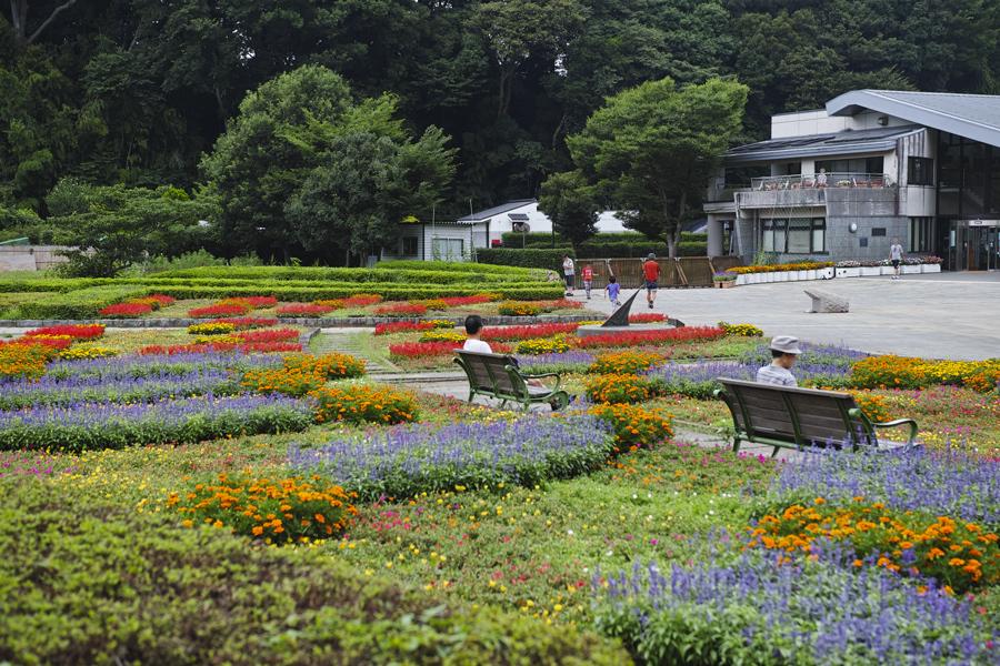 sd Quattro で野鳥撮影は楽しめないのか?いえいえ。~松戸市・21世紀の森公園でカワセミを楽しむ(前編)~_c0223825_00392632.jpg