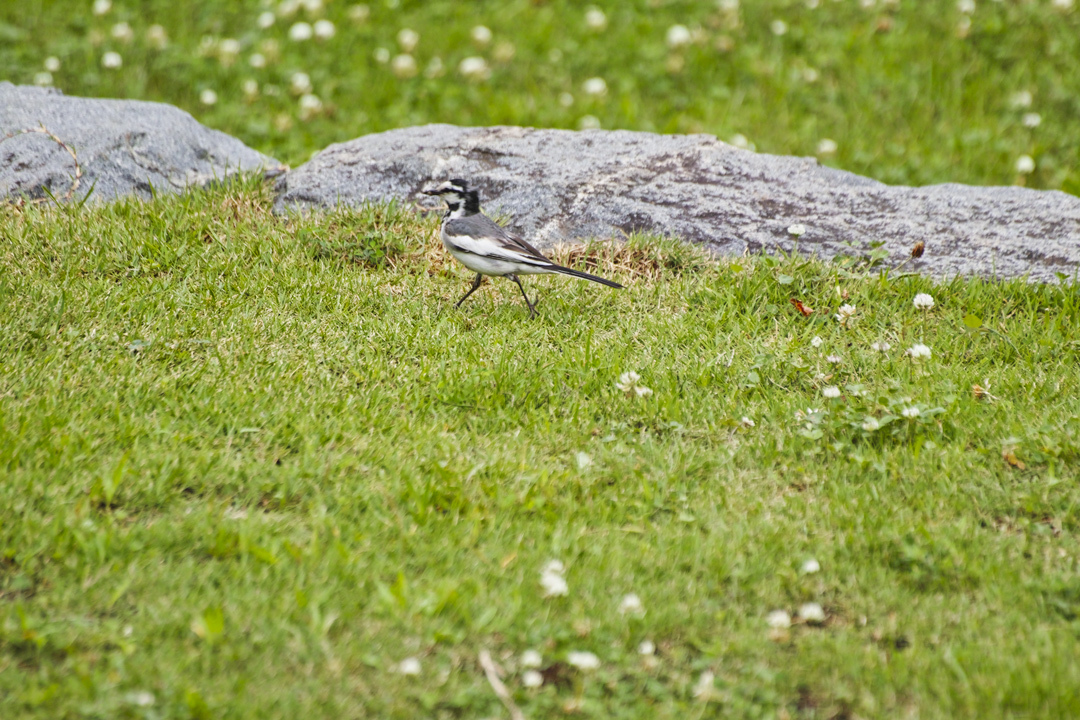 sd Quattro で野鳥撮影は楽しめないのか?いえいえ。~松戸市・21世紀の森公園でカワセミを楽しむ(前編)~_c0223825_01053870.jpg