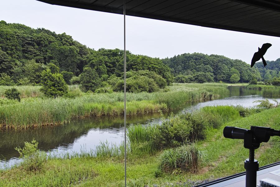 sd Quattro で野鳥撮影は楽しめないのか?いえいえ。~松戸市・21世紀の森公園でカワセミを楽しむ(前編)~_c0223825_01124096.jpg