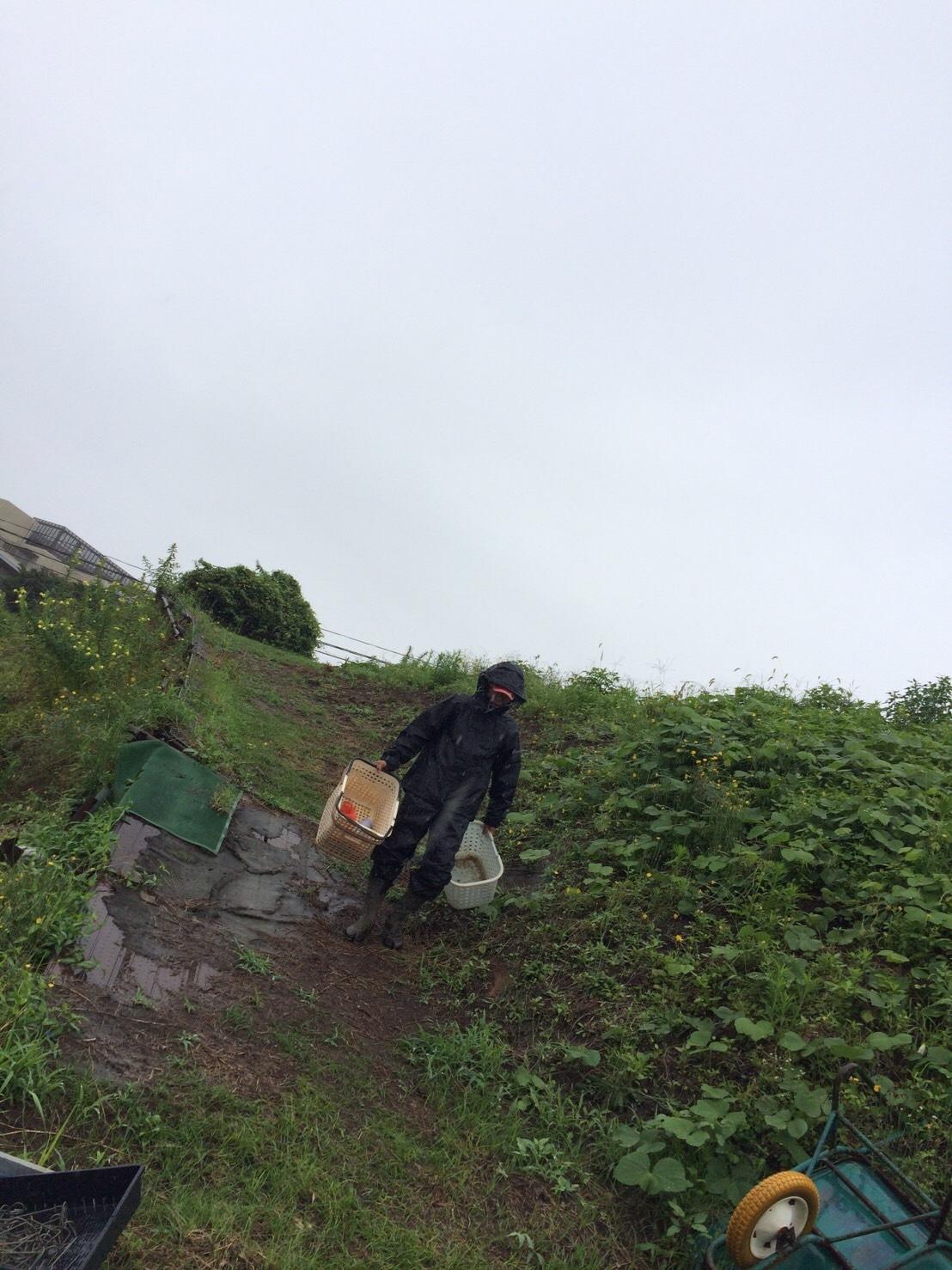 今朝は土砂降り・・・ナスの櫓を組み始めます_c0222448_15135150.jpg