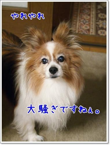 d0013149_00035661.jpg