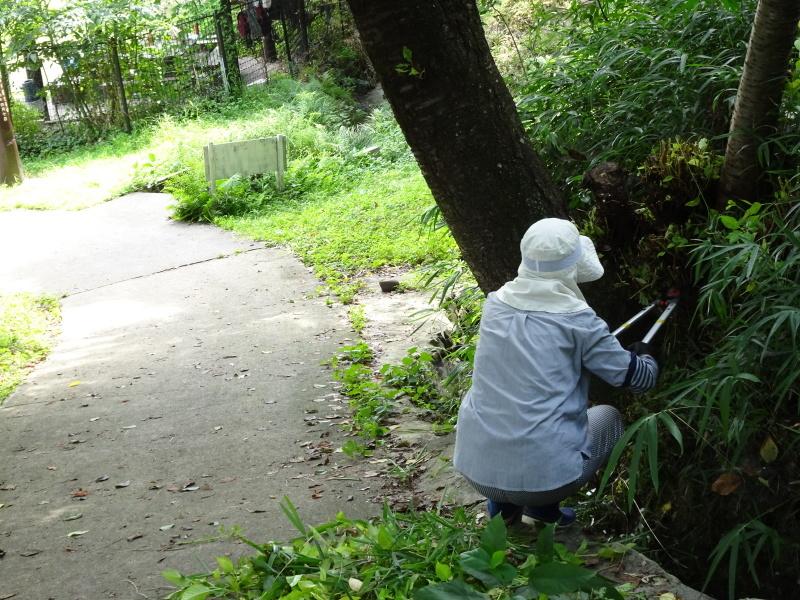うみべの森にもカブトムシは健在である_c0108460_21261844.jpg