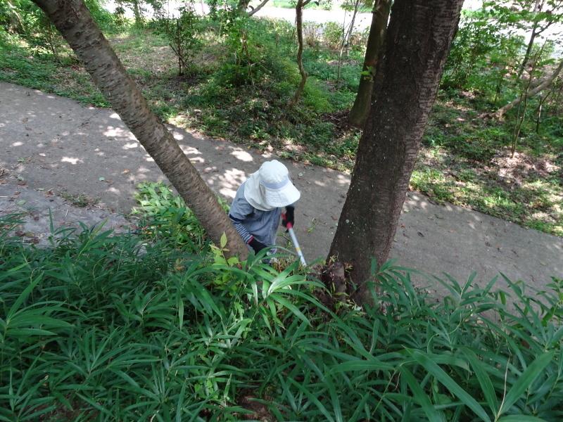 うみべの森にもカブトムシは健在である_c0108460_21262760.jpg