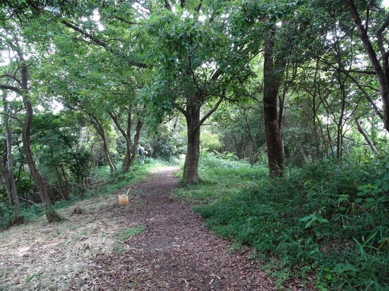 うみべの森にもカブトムシは健在である_c0108460_21290225.jpg