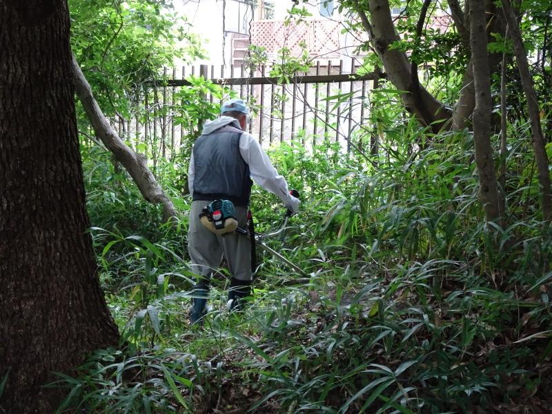 うみべの森にもカブトムシは健在である_c0108460_21290421.jpg
