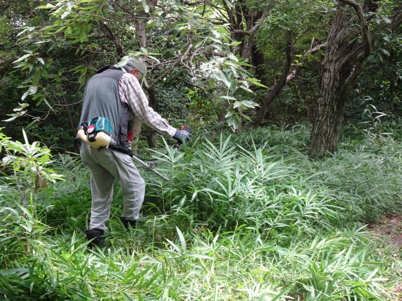 うみべの森にもカブトムシは健在である_c0108460_21290619.jpg