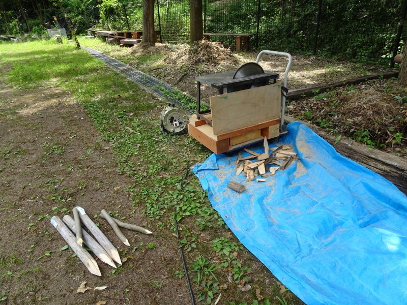 うみべの森にもカブトムシは健在である_c0108460_21330670.jpg