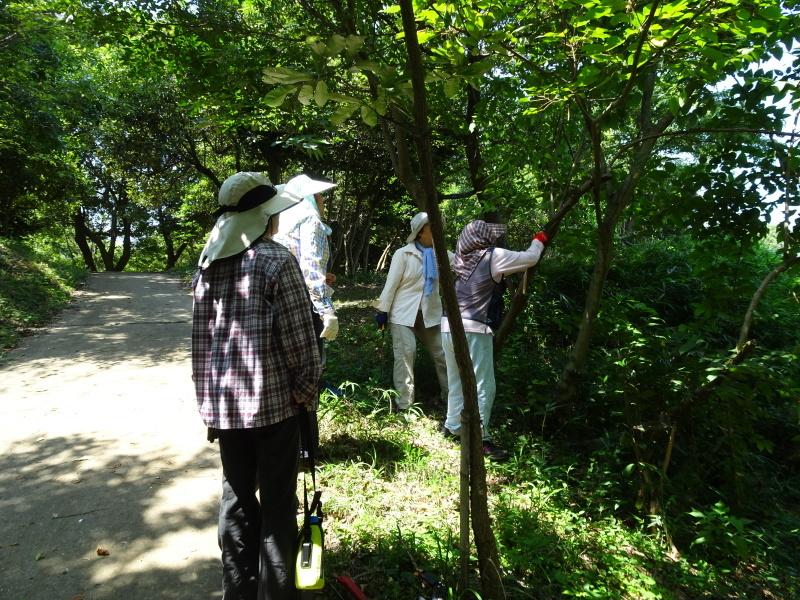 うみべの森にもカブトムシは健在である_c0108460_21380231.jpg