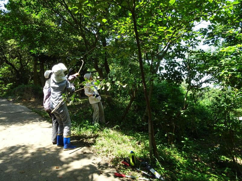 うみべの森にもカブトムシは健在である_c0108460_21380454.jpg