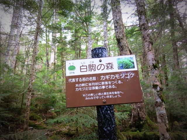 GWの蓼科 ④苔と原生林~白駒の池_f0236260_214516100.jpg