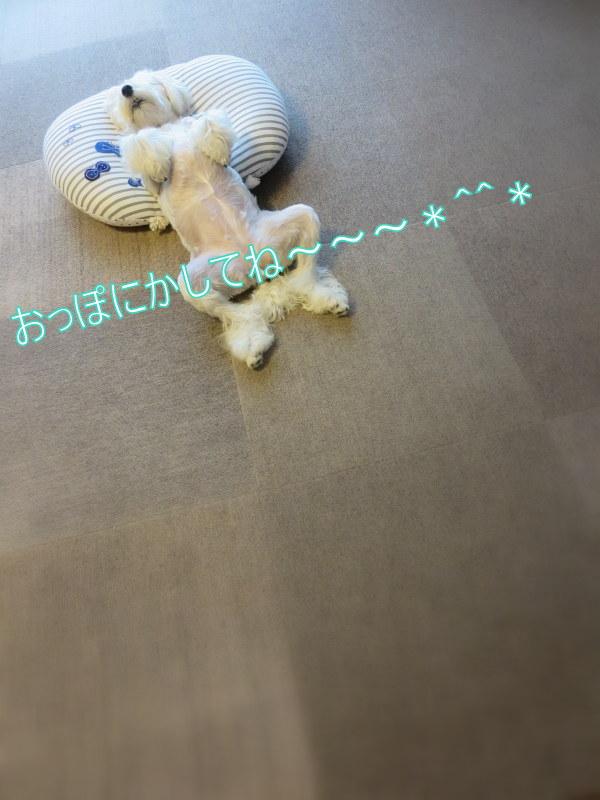 d0264176_194836100.jpg