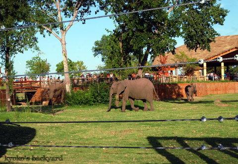 Twilight Tuesday @ Sedgwick County Zoo_b0253205_02384041.jpg