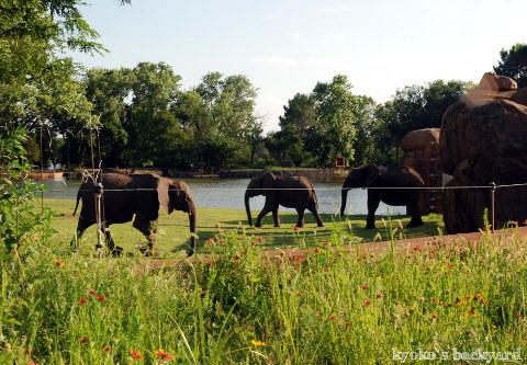 Twilight Tuesday @ Sedgwick County Zoo_b0253205_02390377.jpg