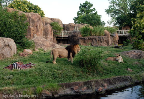 Twilight Tuesday @ Sedgwick County Zoo_b0253205_02393290.jpg