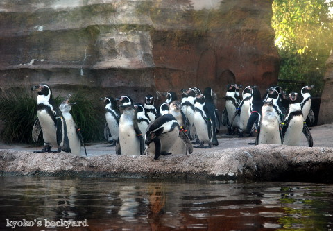 Twilight Tuesday @ Sedgwick County Zoo_b0253205_02405628.jpg