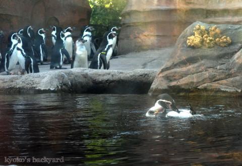 Twilight Tuesday @ Sedgwick County Zoo_b0253205_02412075.jpg