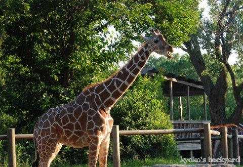 Twilight Tuesday @ Sedgwick County Zoo_b0253205_02422818.jpg