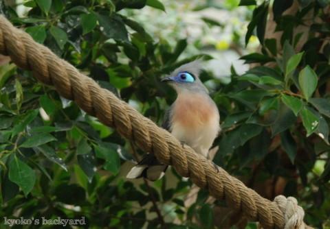 Twilight Tuesday @ Sedgwick County Zoo_b0253205_02432563.jpg