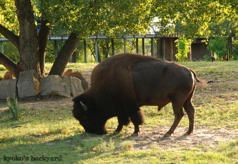 Twilight Tuesday @ Sedgwick County Zoo_b0253205_02440341.jpg