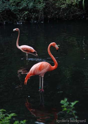 Twilight Tuesday @ Sedgwick County Zoo_b0253205_02441437.jpg
