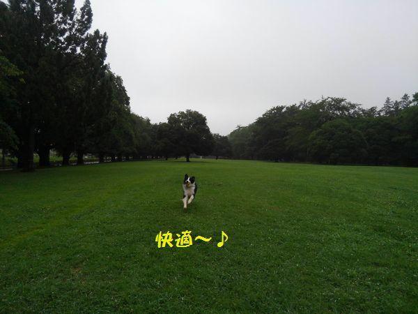 d0224111_16471050.jpg