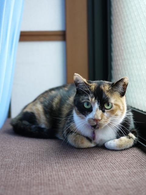 猫のお留守番 ごまちゃん編。_a0143140_1974447.jpg