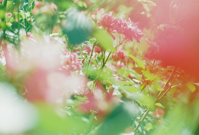 b0178548_17423990.jpg