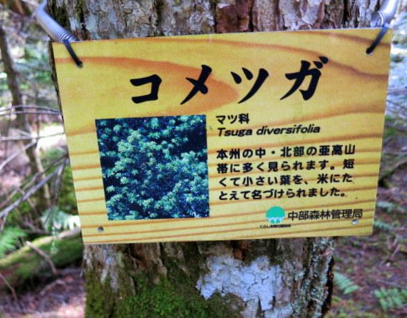 GWの蓼科 ④苔と原生林~白駒の池_f0236260_13480.jpg