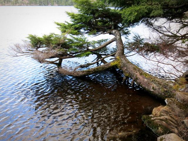GWの蓼科 ④苔と原生林~白駒の池_f0236260_250984.jpg