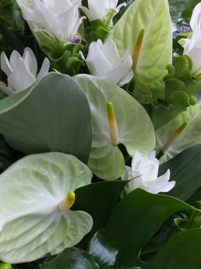 オークリーフ(クルクマとアンスリュームのスタンド装花)_f0049672_13322426.jpg