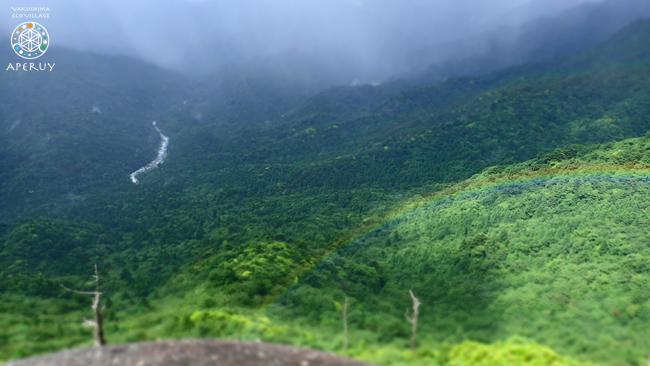 静かな森歩き_f0252883_11540524.jpg
