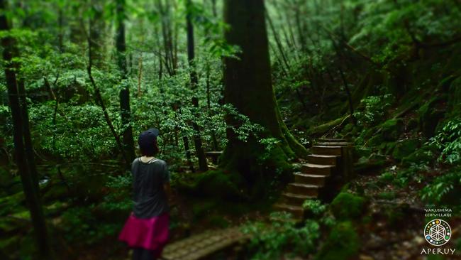 静かな森歩き_f0252883_11543031.jpg