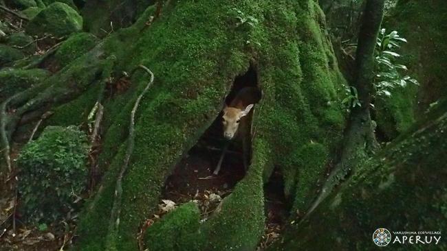 静かな森歩き_f0252883_11544457.jpg