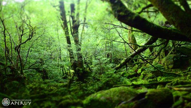 静かな森歩き_f0252883_11545586.jpg