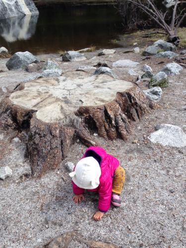 ヨセミテ国立公園へ_d0191206_16172301.jpg