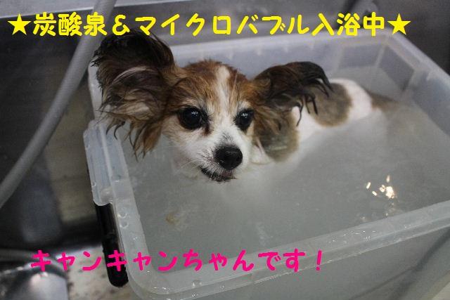 b0130018_713199.jpg