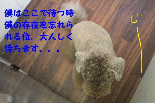 b0130018_7201744.jpg