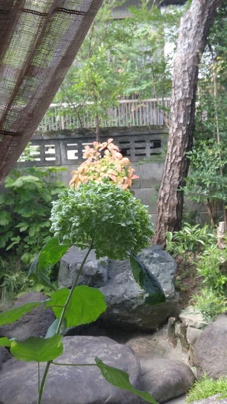 鮎の鳳城苑としまうまカフェ❣_f0361132_10371268.jpg