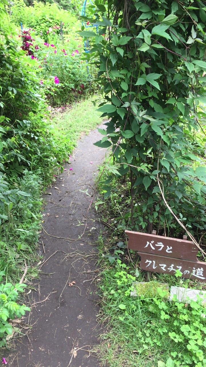 北海道ガーデン街道2日目の 2_c0335145_17232197.jpg