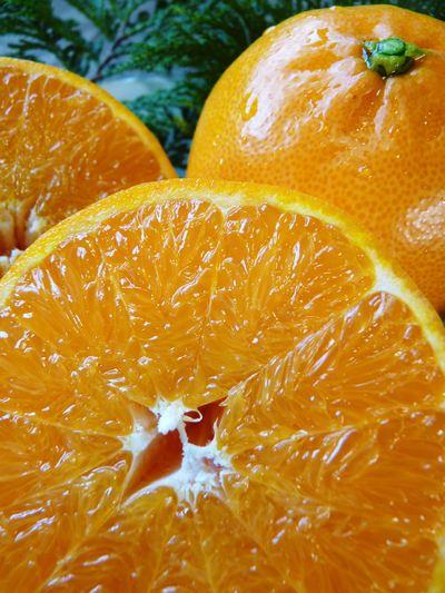 究極の柑橘「せとか」 着果から匠の摘果作業までの話_a0254656_14471419.jpg
